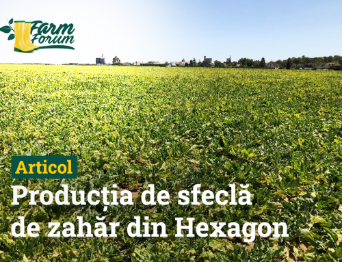 Lipsa neonicotinoidelor a înjumătățit producția de sfeclă de zahăr din Hexagon